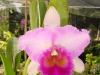 FlowersPhanganIsland-02