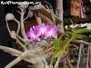 FlowersPhanganIsland-03