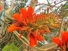 FlowersPhanganIsland-04