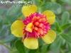 FlowersPhanganIsland-05