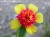 FlowersPhanganIsland-06