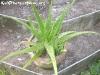 FlowersPhanganIsland-08