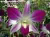 FlowersPhanganIsland-10