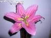 FlowersPhanganIsland-11