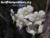 FlowersPhanganIsland-12