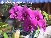 FlowersPhanganIsland-13