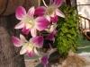FlowersPhanganIsland-15