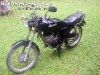 MotorbikeForSalePhangan-16