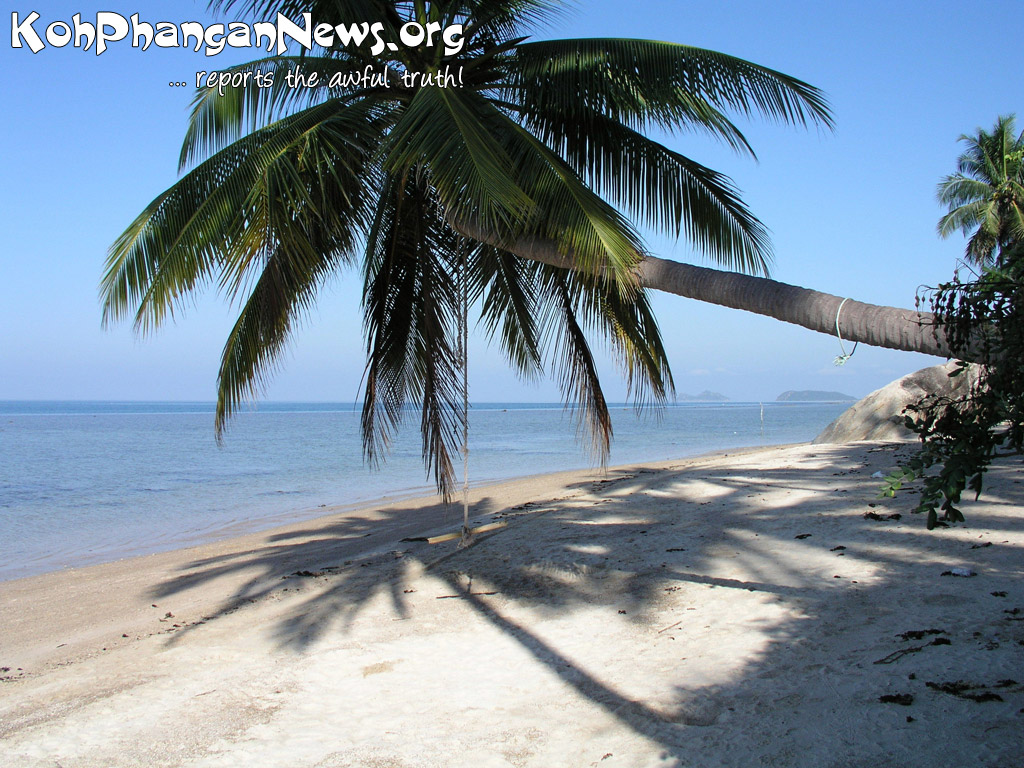 palm trees of koh phangan island koh phangan island news
