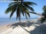 Palm Trees Koh Phangan