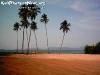 PalmTreesPhangan-06