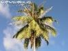 PalmTreesPhangan-10