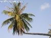 PalmTreesPhangan-15