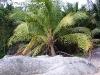 PalmTreesPhangan-28