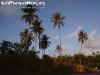 PalmTreesPhangan-36