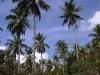 PalmTreesPhangan-39