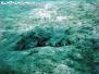 Snorkeling Koh Phangan