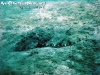 SnorkelingPhangan-001