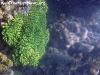 SnorkelingPhangan-002