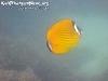 SnorkelingPhangan-004