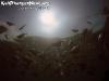 SnorkelingPhangan-008