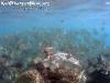 SnorkelingPhangan-009