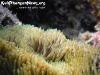 SnorkelingPhangan-015