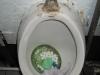 ToiletsPhangan-06